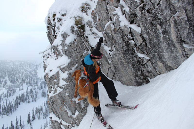 Whistler Avalanche Rescue Dogs